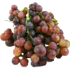 Grapes Red Crimson Majestic