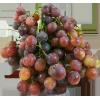 Grapes Red Crimson Majestic