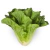 Canada Romaine Lettuce