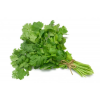 Organic Cilantro Bunch