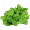 USDA Produce Fresh Mint