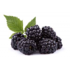 Organic Blackberries 6oz
