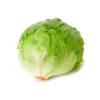 FS Leaf Lettuce
